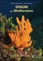 SPUGNE DEL MEDITERRANEO